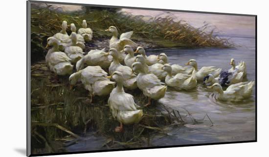 Ducks on the Lakeshore-Alexander Koester-Mounted Giclee Print