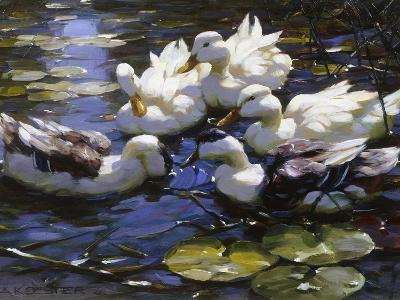 Ducks on the River-Alexander Max Koester-Giclee Print