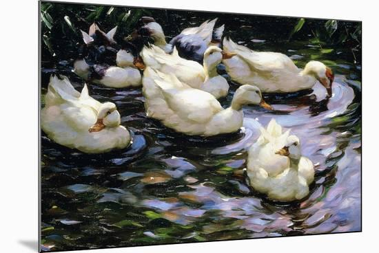Ducks Swimming in a Sunlit Lake-Alexander Koester-Mounted Giclee Print