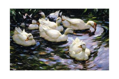 https://imgc.artprintimages.com/img/print/ducks-swimming-in-a-sunlit-lake_u-l-ppos8n0.jpg?p=0