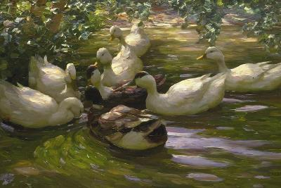 Ducks under Birch Twigs-Alexander Koester-Giclee Print