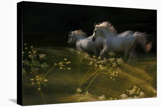 Duel-Milan Malovrh-Stretched Canvas Print