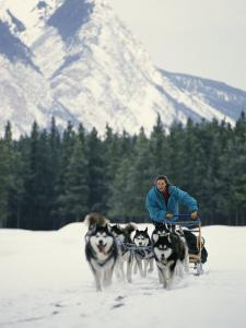 A Woman Driving a Dogsled in a Forest by Dugald Bremner