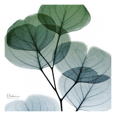 https://imgc.artprintimages.com/img/print/dull-eucalyptus-mate_u-l-f8ix4c0.jpg?p=0