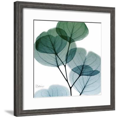 Dull Eucalyptus Mate-Albert Koetsier-Framed Art Print