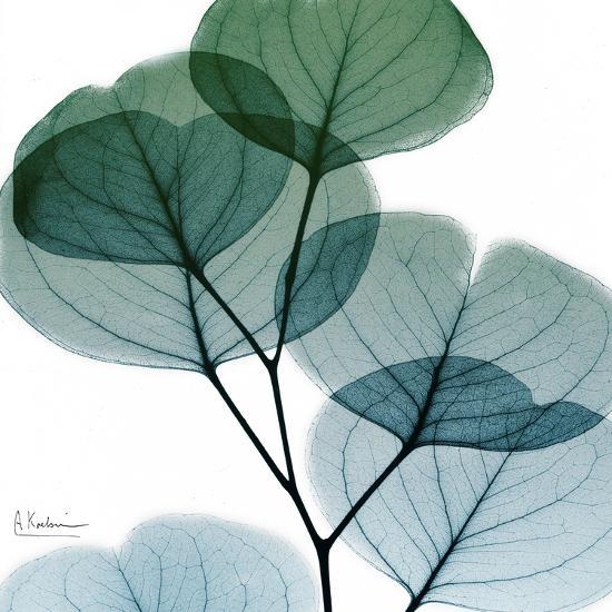 Dull Eucalyptus Mate-Albert Koetsier-Art Print
