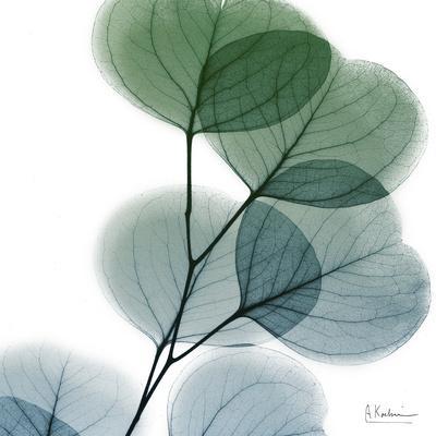https://imgc.artprintimages.com/img/print/dull-eucalyptus_u-l-q19b81h0.jpg?p=0
