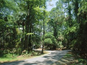Sub Tropical Forest, Hunting Island State Park, South Carolina, USA by Duncan Maxwell
