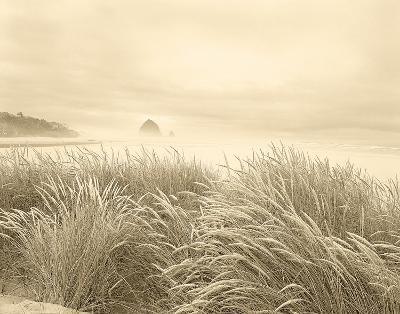 Dune Breeze-Adam Brock-Giclee Print