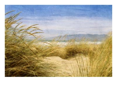 https://imgc.artprintimages.com/img/print/dune-grass-4_u-l-pigbt60.jpg?p=0
