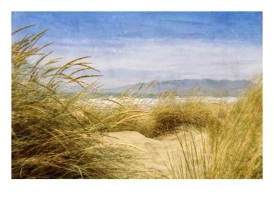 Dune Grass 4-Thea Schrack-Premium Photographic Print