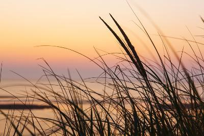 Dune Grasses at Coast Guard Beach in the Cape Cod National Seashore. Eastham, Massachusetts-Jerry and Marcy Monkman-Photographic Print