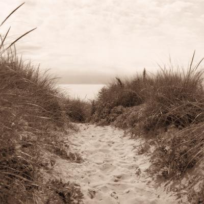 Dune Path-Christine Triebert-Photographic Print