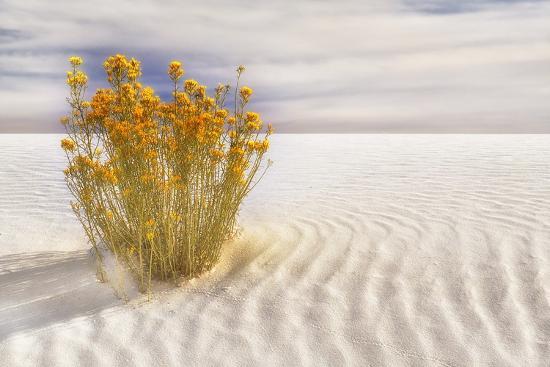 Dunescape #2-Deborah Loeb Bohren-Photographic Print