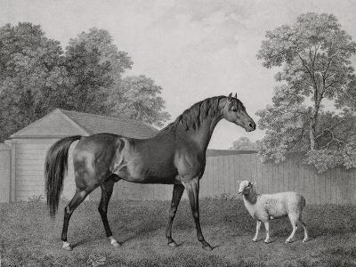 Dungannon, Engraved by George Townley Stubbs (1756-1815) Pub. 1794 (Etching)-George Stubbs-Giclee Print