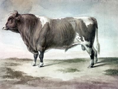 Durham Bull, 1856-August Kollner-Giclee Print