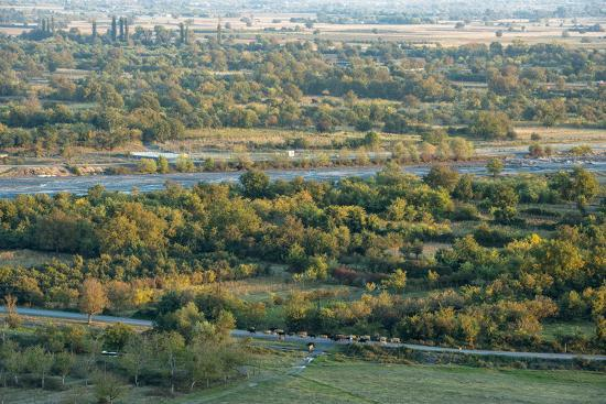 Duruji river, cow, forest, evening, road, rural, Kakheti-Sergey Orlov-Photographic Print