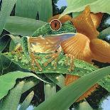 Iguana-Durwood Coffey-Giclee Print