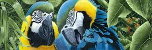 Blue and Yellow Macaws by Durwood Coffey