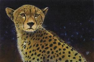 Cheetah by Durwood Coffey