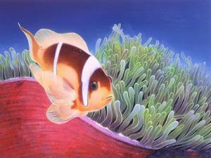 Clown Fish by Durwood Coffey