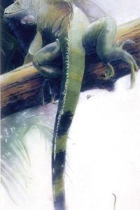 Iguana by Durwood Coffey