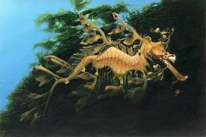 Leafly Sea Dragon by Durwood Coffey