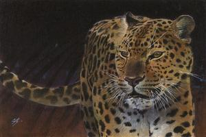 Leopard by Durwood Coffey