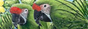 Military Macaws by Durwood Coffey