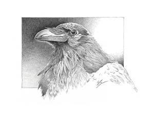 Ravens Head by Durwood Coffey