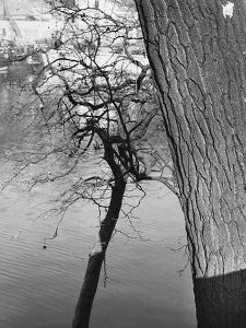 A Tree by Dusan Stanimirovitch