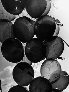 Baloons by Dusan Stanimirovitch