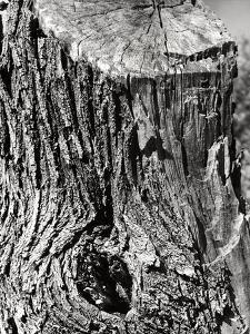 Tree Trunk by Dusan Stanimirovitch