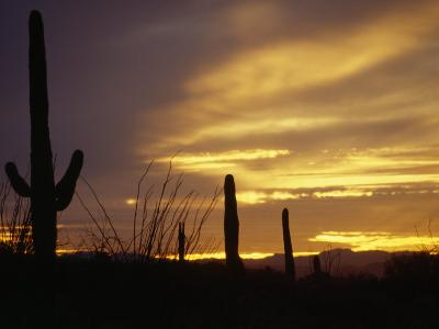 Dusk Descends over Cacti in the Arizona Desert-xPacifica-Photographic Print