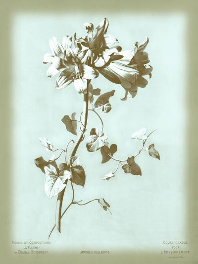 Dussurgey Amaryllis on Blue-Dussurgey-Art Print