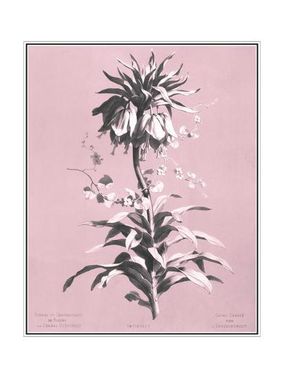 Dussurgey Imperiale on Pink-Dussurgey-Art Print