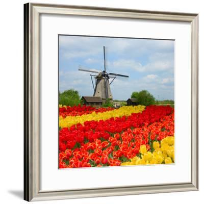 Dutch Windmill over Tulips Field-neirfy-Framed Photographic Print