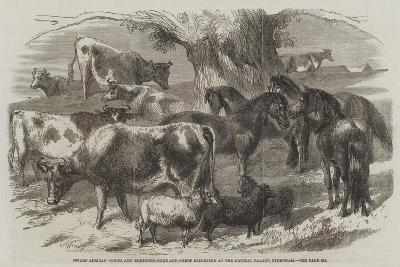 Dwarf African Ponies and Bretonne Cows and Sheep Exhibited at the Crystal Palace, Sydenham-Harrison William Weir-Giclee Print