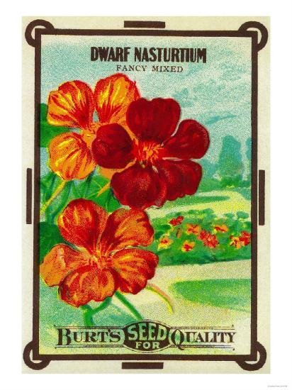 Dwarf Nasturtium Seed Packet-Lantern Press-Art Print
