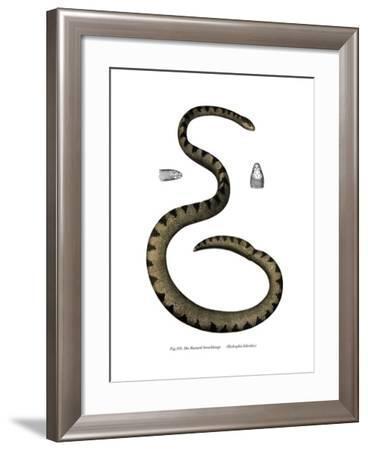 Dwarf Seasnake--Framed Giclee Print