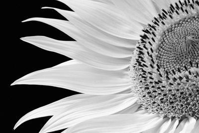 https://imgc.artprintimages.com/img/print/dynamic-flower_u-l-f982nr0.jpg?p=0