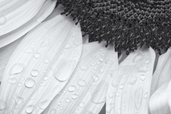 Dynamic Focus-Markus Lange-Giclee Print