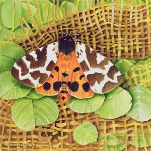 Tiger Moth, 1999 by E.B. Watts