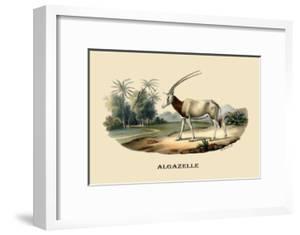 Algazelle by E.f. Noel
