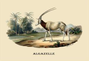 Algazelle by E.f. Noel