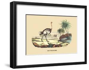 Autruche (Ostrich) by E.f. Noel