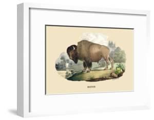 Bison by E.f. Noel