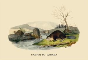 Castor du Canada by E.f. Noel
