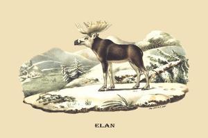 Elan by E.f. Noel