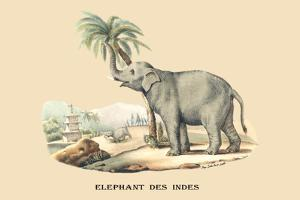 Elephant d'Inde by E.f. Noel
